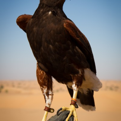 Falconry and Wildlife Safari